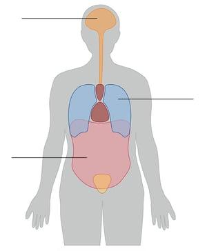 body-cavities-1